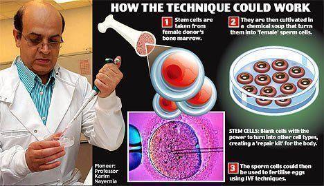Slate reccomend Female bone marrow sperm